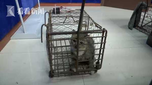 男子为诱捕流浪猫 捉国家二级保护动物做诱饵